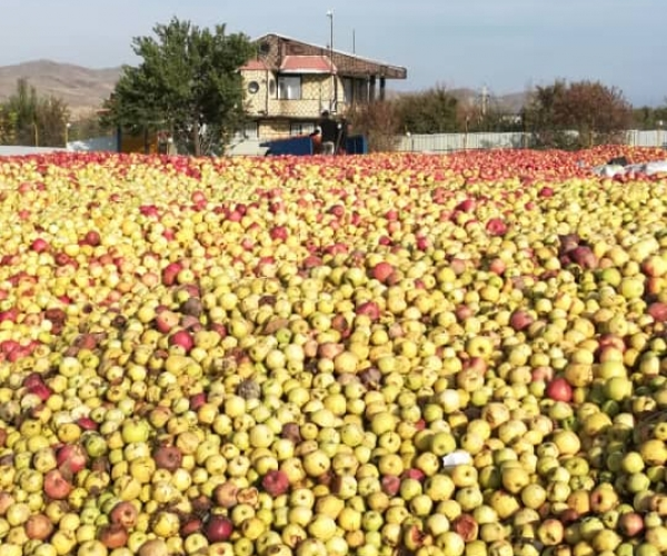 صفر تا صد تولید کمپوت و آبمیوه سیب که چگونه 20 برابر سود کنیم