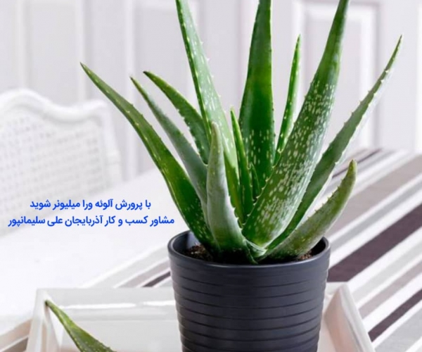 چگونه با پرورش آلوئه ورا میلیونر شویم Aloeveraصفرتاصد پرورش الوئه ورا